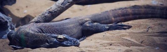 NIght croc walk3eb.jpg